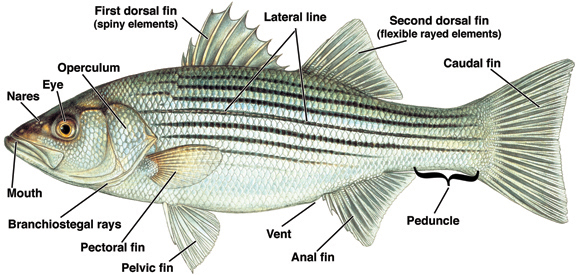 Guide to finfish lesions